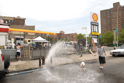 photo ~ a dog takes a shower ~ 2008-06-29 ~ Carnival ~ sputnyc